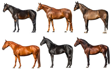 Horses collection exterior isolated on white background