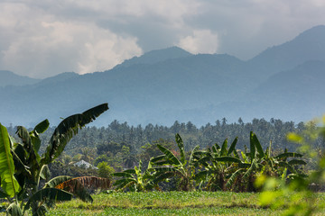 Die wunderschöne Welt Javas