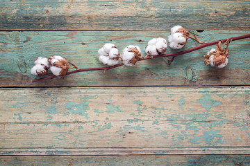 Delicate dried white cotton flowers on old turquoise wooden background. Copy space.