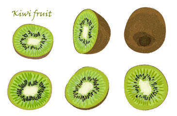 Set of hand-drawn kiwi fruit, single, peeled and sliced fruits. realistic drawing, isolated on white background