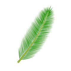 tropical palm leave