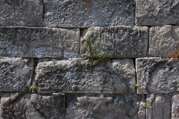 grass was born on a brick wall.