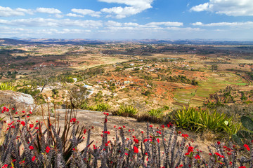View towards Antananarivo seen from the royal hill Ambohimanga in Madagascar with crown of thorns flowers (Euphorbia milii)