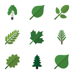 Flat Icon Ecology Set Of Timber, Park, Leaves And Other Vector Objects. Also Includes Forest, Spruce, Acacia Elements.