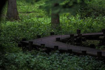 木の遊歩道