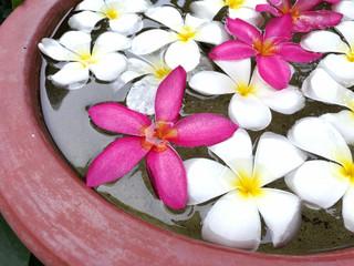 Plumeria petals in the tub
