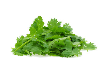 Fresh coriander leaf isolated on white background