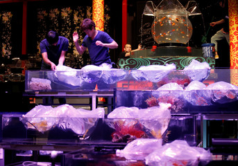 Staff put plastic bag holding fish into tanks as they prepare the Art Aquarium exhibition in Tokyo