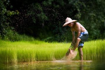 farmer in action