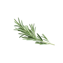 Rosemary herb. Spice rosemary. Vector illustration of rosemary
