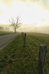 Foggy Spring Morning, Cades Cove, Great Smoky Mountains NP