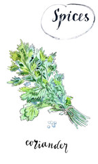 Watercolor fresh green coriander leaves
