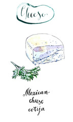 Piece of Mexican cotija cheese with cilantro in watercolor