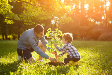Father and son setting plant