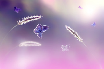 Butterflies in flight against a background of wild nature in pink tones. Artistic image. Soft focus.