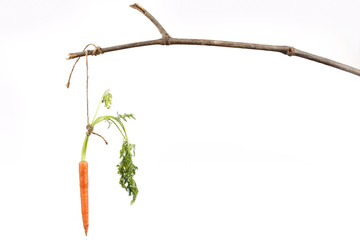 Carrot tied to stick as motivation