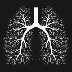 Vessels of the human lungs
