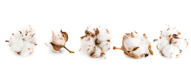 cotton flowers