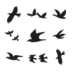 Silhouette Black Fly Flock Of Birds. Vector