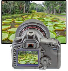 Maurice, jardin des Pamplemousses sur écran d'appareil photo