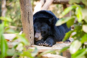 Bear rescue centre in Laos