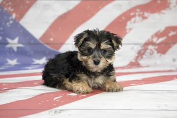 Yochon on American Flag background