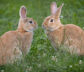 a cute rabbits in grass - close up
