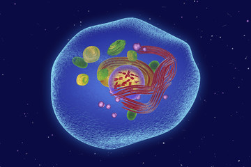 Keratinocyte skin cell, illustration