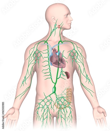 Lymph Node Diagram Unlabeled - Electrical Work Wiring Diagram •