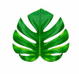 Green tropical leaf isolated on white background with clipping path