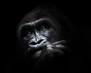Western Lowland Gorilla III