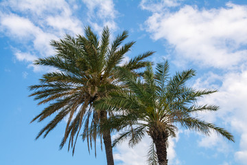 Palms against the sky