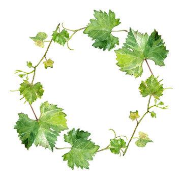 wreath of grape leaves, watercolor sketch