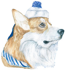 Dog a sailor. Corgi, freehand drawing watercolor. For registration of dog shows, veterinary clinics and sites