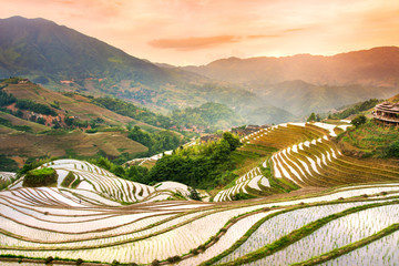Garden Poster Rice fields Sunset over terraced rice field in Longji, Guilin in China