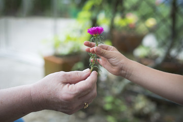 Grandmother and granddaughter hand over pink flower