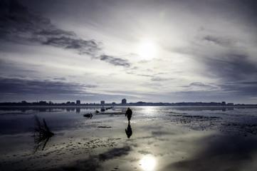 Alone in the tideland