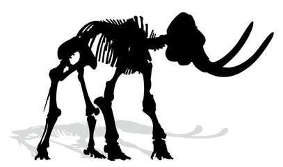 Skeleton of mammoth.