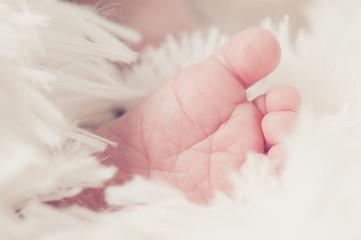 Tiny newborn's foot