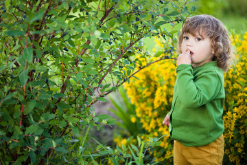 Adorable little girl eats berries from the bush