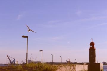 Eine Fliegende Möve an der Küste..