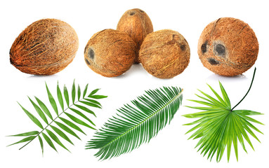 Coconuts and palm leaves on white background