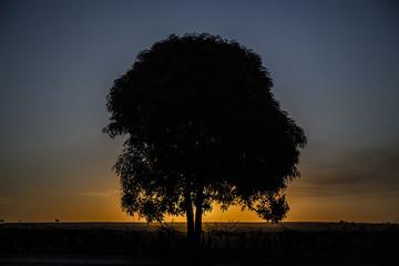 tree sunset black