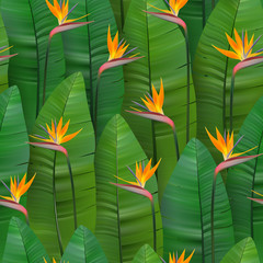 Seamless tropical pattern with strelitzia. Vector illustration. Realistic tropical plants and flowers seamless background.