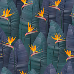 Vector seamless pattern with tropical strelitzia flowers.
