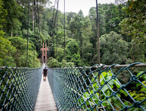 Virgin Rainforest, Ulu Temburong National Park, Brunei
