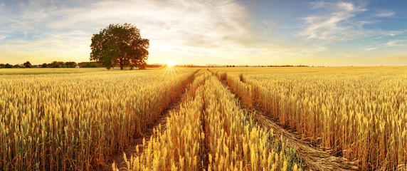 Gold Wheat flied panorama with tree at sunset, rural countryside Wall mural