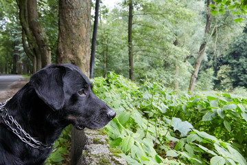 cute black dog in the forest