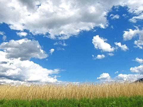 Getreidefeld im Sommer mit Wolkenhimmel