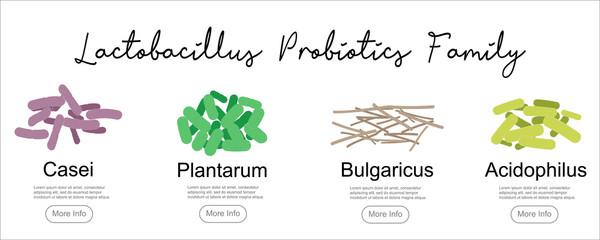 Probiotics Lactobacillus family, vector illustration. Good bacteria microorganism isolated on white background. Probiotics vector concept.